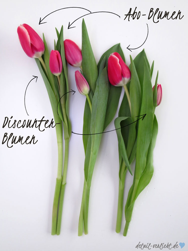 Größenvergleich Tulpen