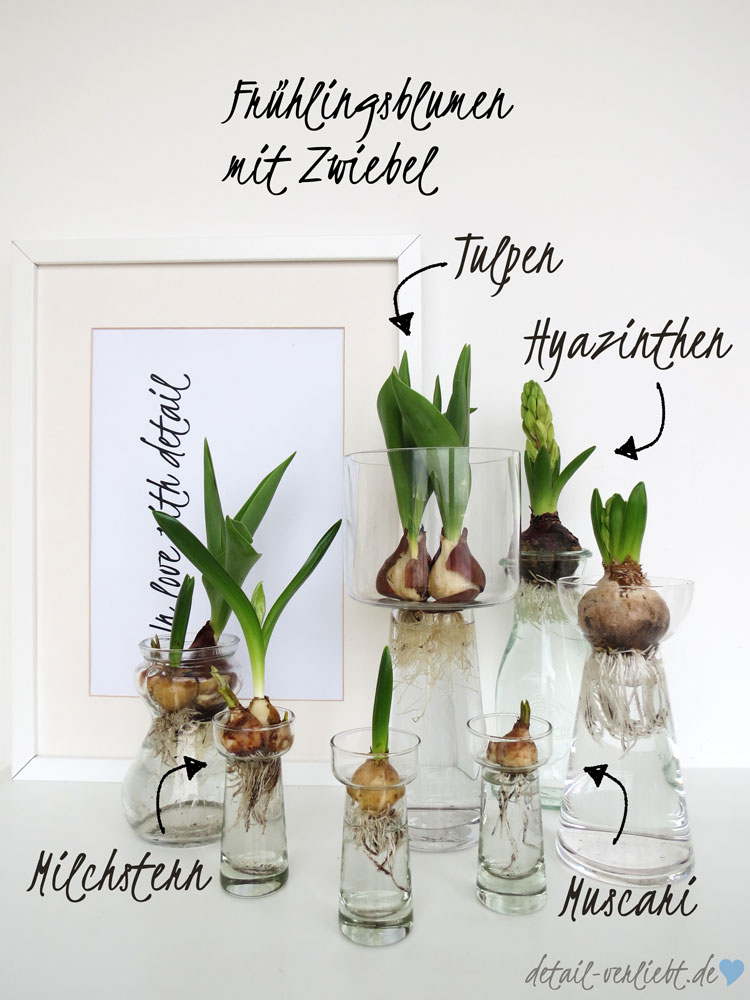 fr hbl herzwiebeln in der vase diy mit blumen detail. Black Bedroom Furniture Sets. Home Design Ideas
