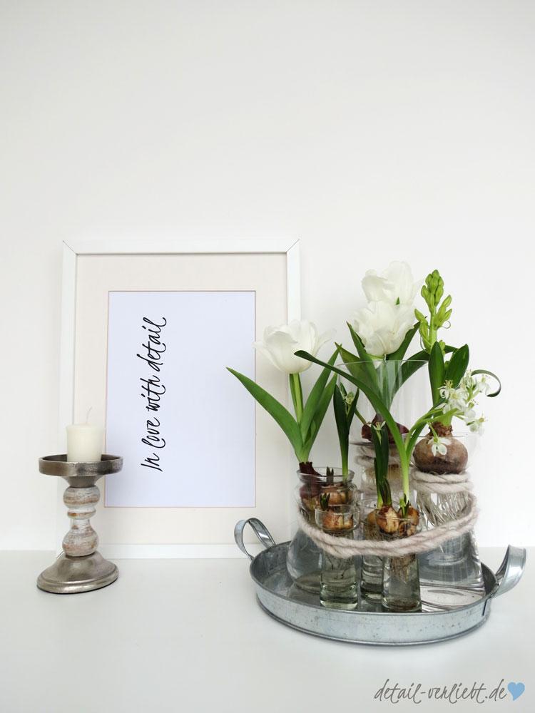 Blumenzwiebeln in der Vase sind eine tolle Frühlingsdekoration. Besonders eignen sich die Frühblüher Hyazinthen und Tulpen dafür.