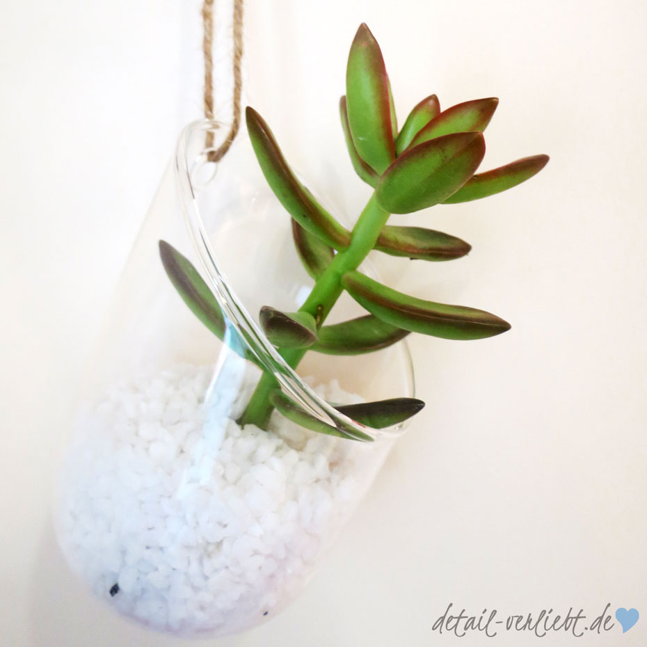 Pflanzen in der Küche ist das aktuelle Thema der Urban Jungle Bloggers. Ich habe meine Küche mit Hänge-Sukkulenten verschönert.