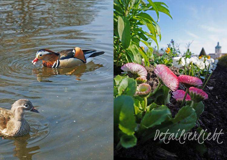 www.detail-verliebt.de: Mandarinentenpärchen und Frühblüher im Schlosspark Charlottenburg