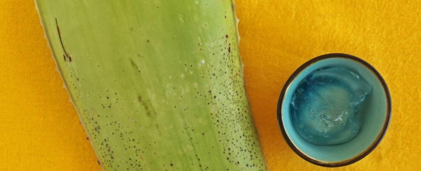 www.detail-verliebt.de: Aloe Vera Gel selber machen aus einem Aloe Vera Blatt: einfach und schnell. Aloe Vera verwenden, mit Aloe Vera pflegen und Aloe Vera in der DIY Kosmetik. #aloevera #diykosmetik #kosmetikselbermachen #stopbuyingstartmaking #keinekosmetikkaufen #naturkosmetik